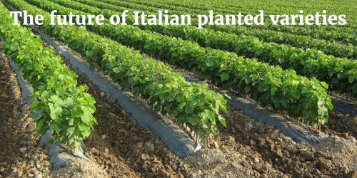The future of Italian planted varieties by Italian Wine & Food In China